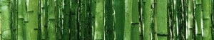 cropped-Bamboo-forest2.jpg